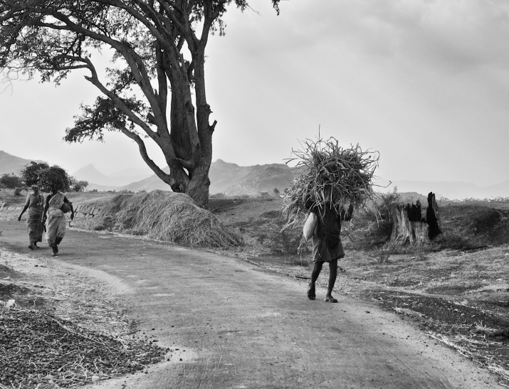 Peasants returning home in evening, carrying hay for their livestock. Theni road, Tamil Nadu, India