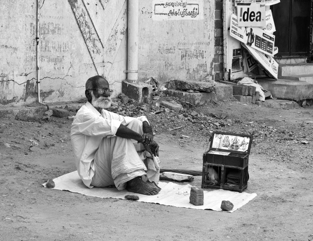 An old parrot-astrologer waiting for his customers, with his parrot and tarot (like) cards, by the road side. Virudhunagar, India.