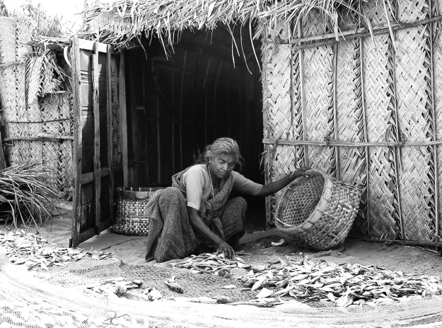 Fisherwoman collecting the dry fishes that she left to dry in front of her hut, Dhanushkodi, Rameshwaram, India
