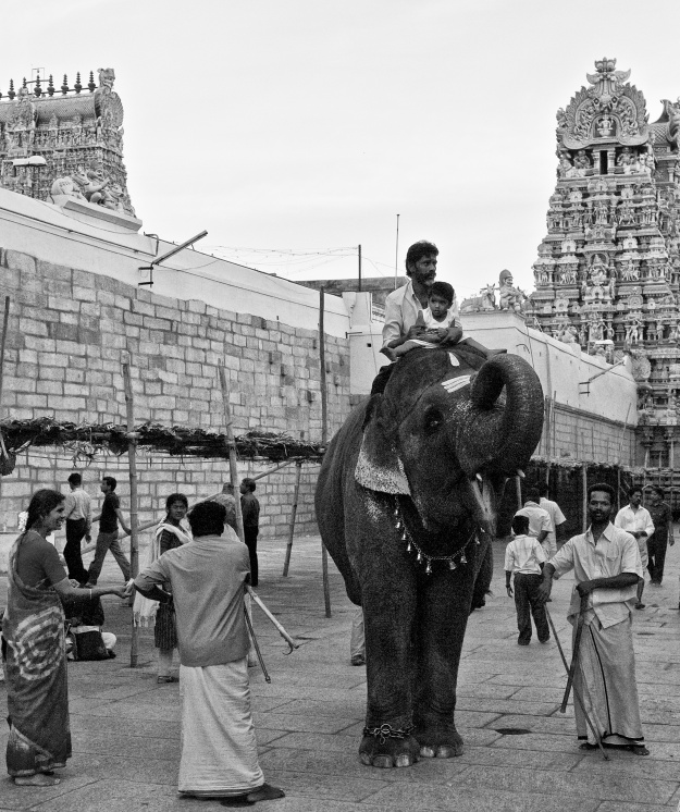 A kid having a ride over the temple elephant, Madurai, Tamil Nadu, India