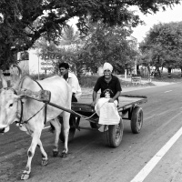 On their way, in bullock cart, Tiruvannamalai, Tamil Nadu, India