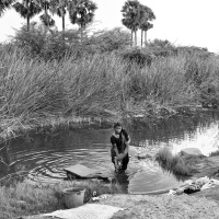 Washerwoman at work, washing the cloths in a pond, Virudunagar, Tamil Nadu, India