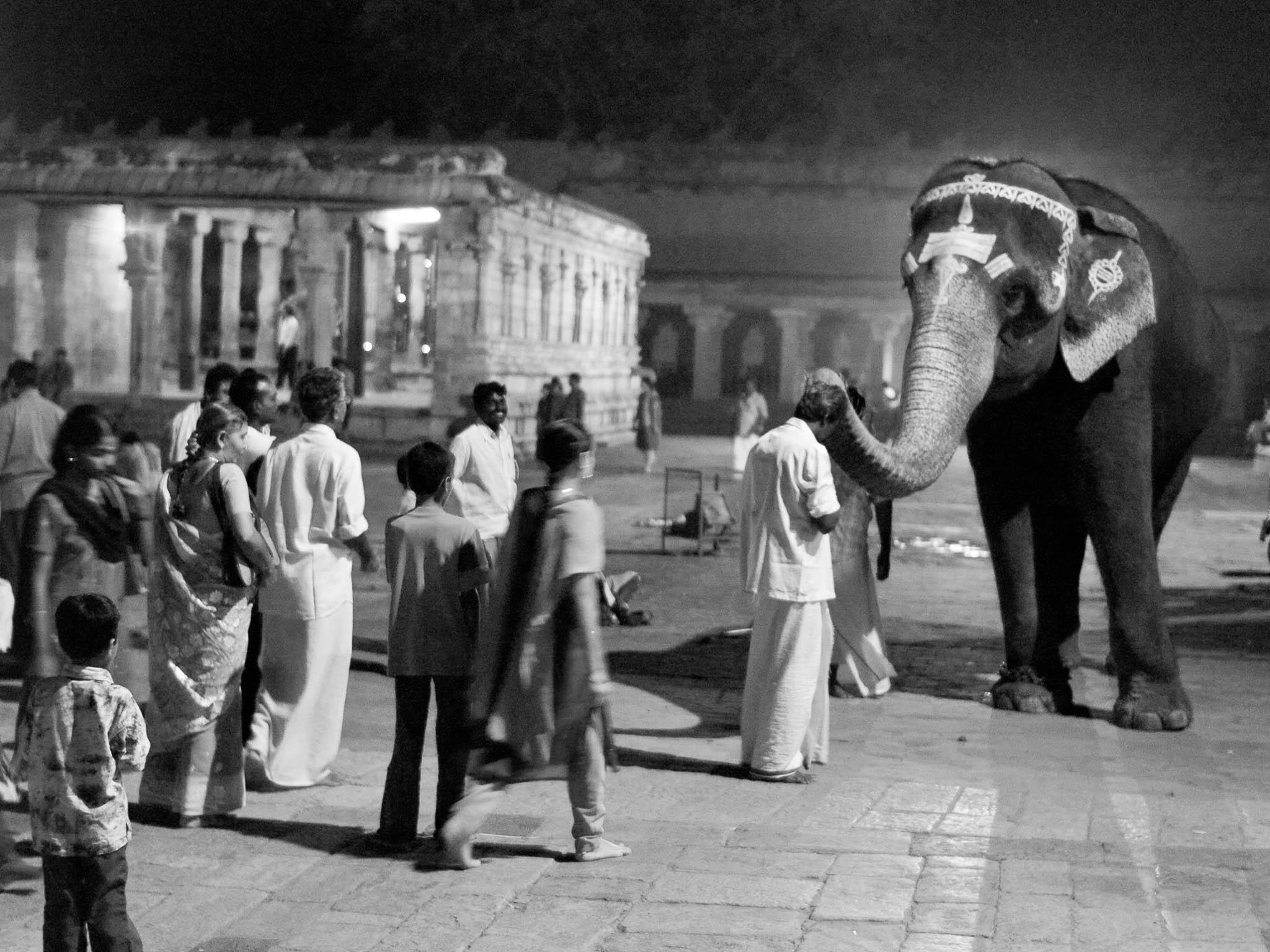 A temple elephant blessing the devotees on a full moon night at Brihadishvara Temple, Thanjavur, Tamil Nadu, India
