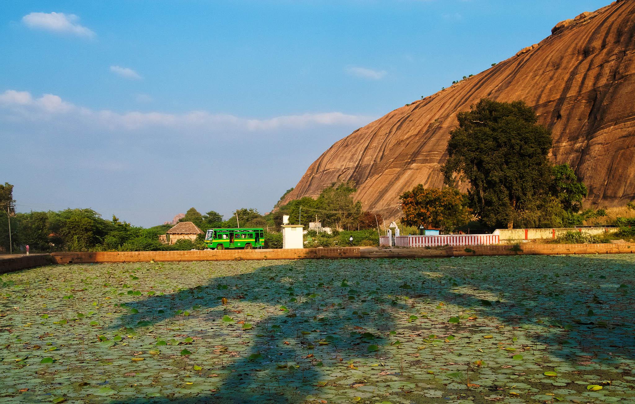 A lotus pond at the base of the Yanamalai mountain and temples, Yanamalai, Madurai, Tamil Nadu, India